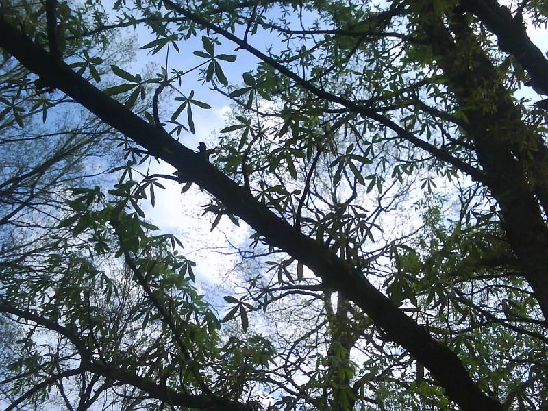 Вырастить коноплю на дереве испаритель марихуаны